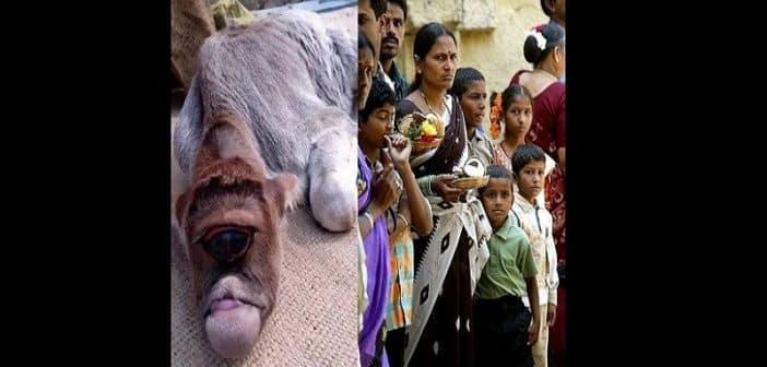 Inde: un veau né avec un seul œil vénéré comme un dieu par des villageois