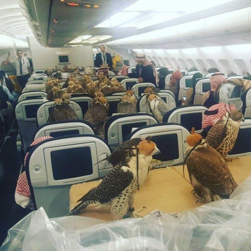 Billet D'avion Pour 80faucons