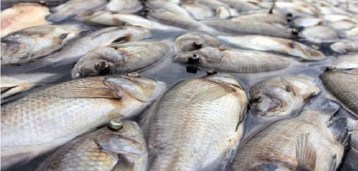 Gabon: découverte de centaines de poissons morts sur les côtes de plusieurs villages