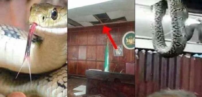 Nigeria: les députés chassés d'une chambre d'Assemblée par des serpents