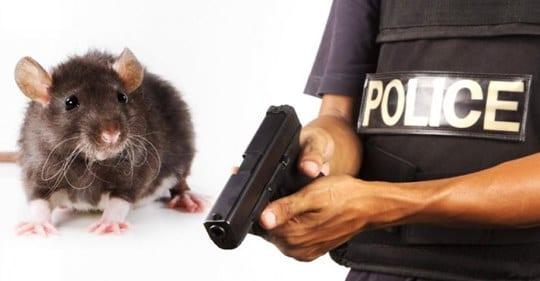 Souris Accusées Par La Police