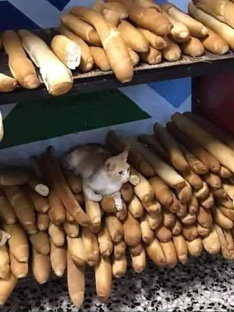 L'image d'un chat assis sur une pile de baguettes de pain destinées à la vente suscite l'indignation de la toile au sénégal
