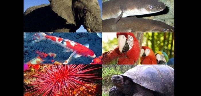 Top 10 des animaux vivant le plus longtemps (photos)