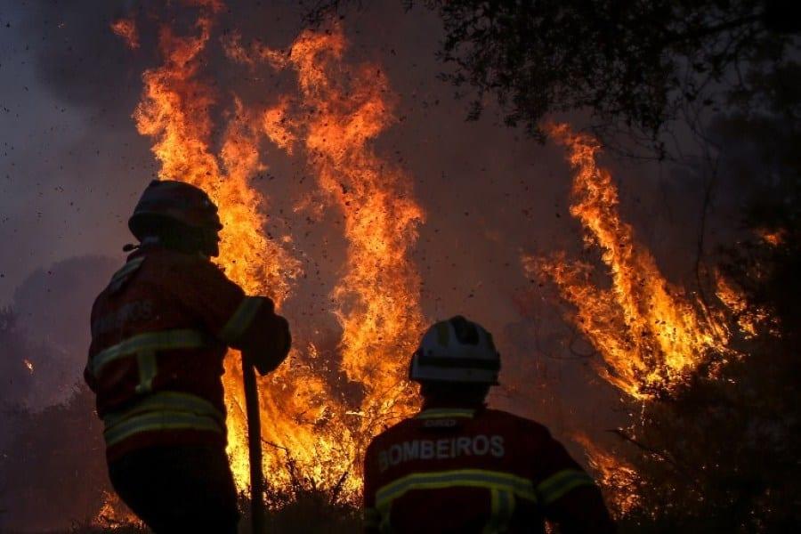 Polémique: Le record de feux de forêt en Afrique Centrale beaucoup plus élevé qu'en Amazonie !