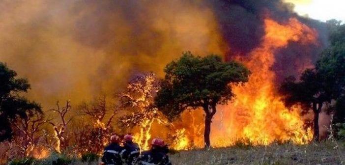 Algérie: Une partie du nord du pays ravagée par un incendie