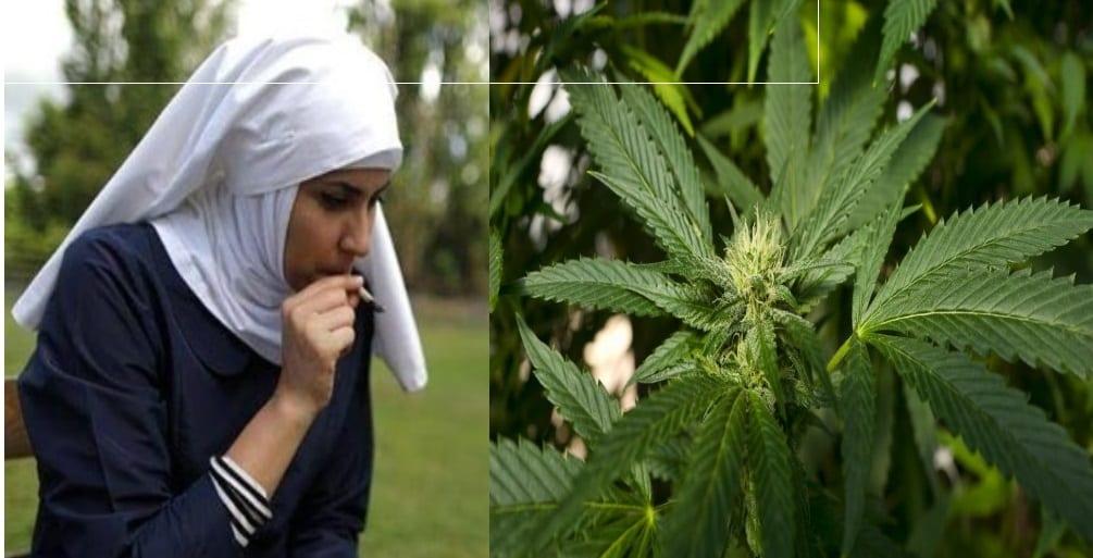 Le Luxembourg sera le premier pays européen à légaliser le cannabis