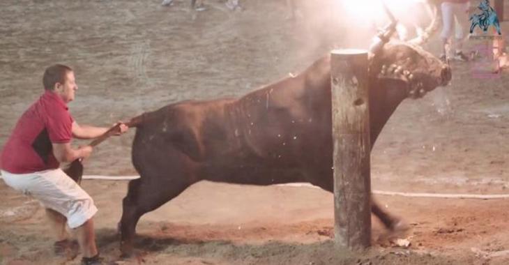 Des barbares mettent le feu aux cornes d'un taureau avant de le tuer