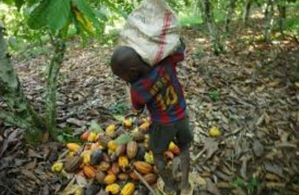 Embargo Sur Le Cacao Ivoirien