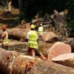 Gabon Exploitation Forestière Illégale Conservation Justice Pour Plus De Fermeté