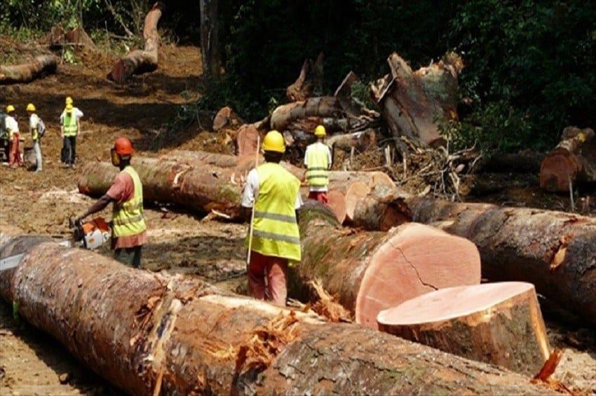 Gabon : Un Chinois condamné pour exploitation illégale de bois