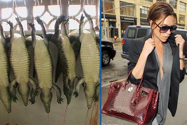 Pour produire les articles de marque Hermès ils découpent des alligators vivants