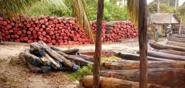 Madagascar : Arrêt de la vente du bois précieux