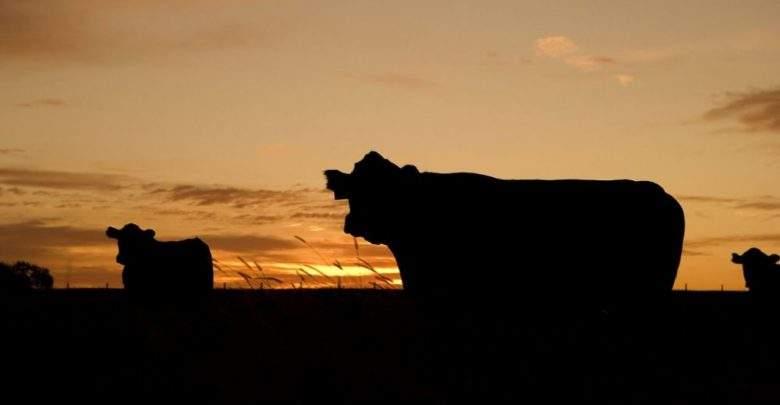 Argentine : Un veau au visage humain voit le jour Video