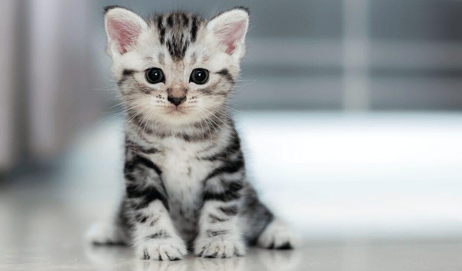 Chine : une société capable de cloner des chats