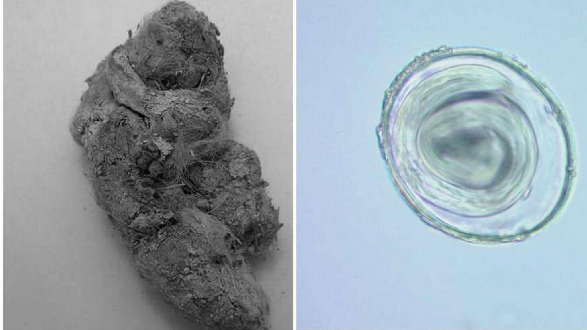 Médecine: Découverte du plus vieux parasite au monde