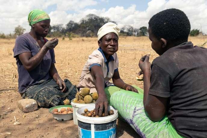 Le Zimbabwe menacé par un risque de famine imminent