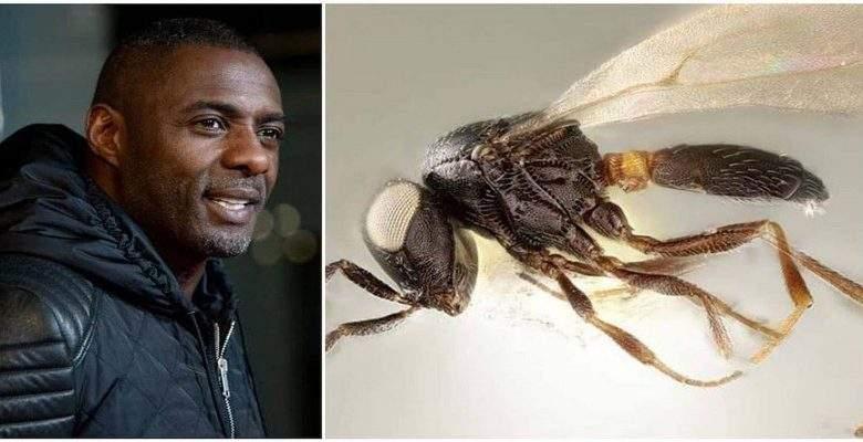 Idris Elba: le nom de l'acteur attribué à une espèce d'insecte