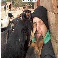 Ce monsieur dort avec 600 chiens abandonnés pour les protéger du froid