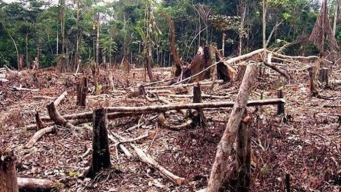 Société : La Côte d'Ivoire a perdu 90% de son patrimoine forestier