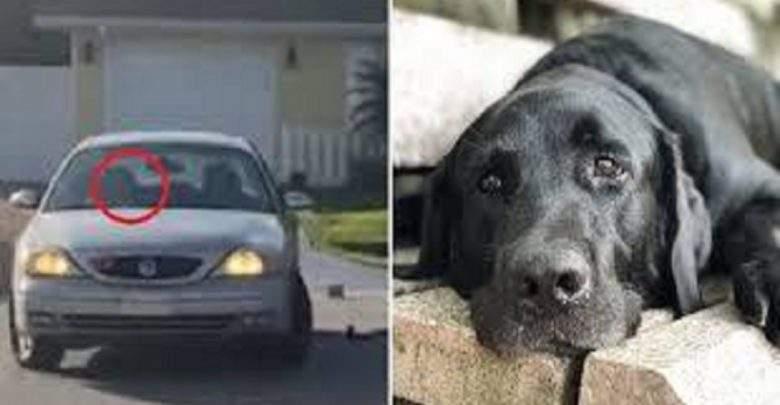 USA-Insolite: un chien conduit une voiture pendant près d'une heure (Vidéo)