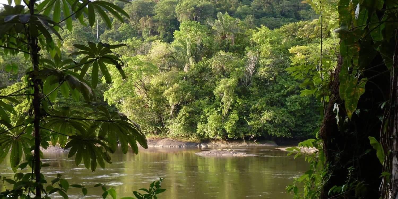 Amazonie : assassinat d'un indigène qui protégeait la forêt