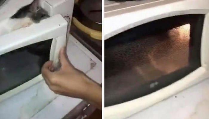 France: deux adolescents enferment un chaton dans un micro-ondes, l'allume, et diffusent la vidéo sur la toile