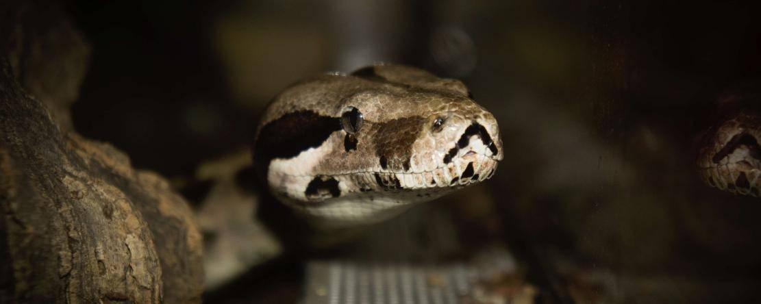 Cameroun/Sorcellerie: Une élèvetuée dans son sommeil par un serpent