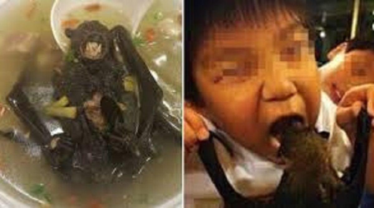 Coronavirus : Le virus tueur pourrait avoir comme origine la soupe de chauve-souris toujours consommée en Chine