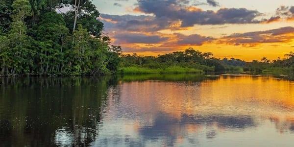 L'incroyable histoire d'une famille qui a survécu un mois dans la forêt de l'Amazonie