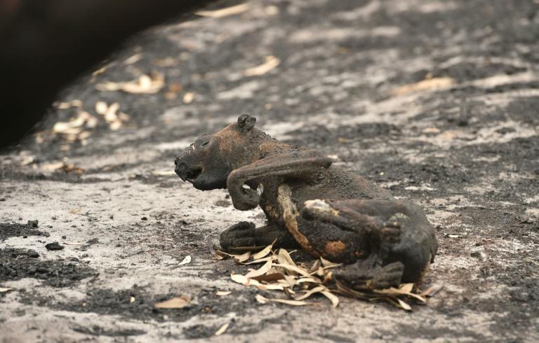 Les incendies en Australie : la pluie tombe en enfin