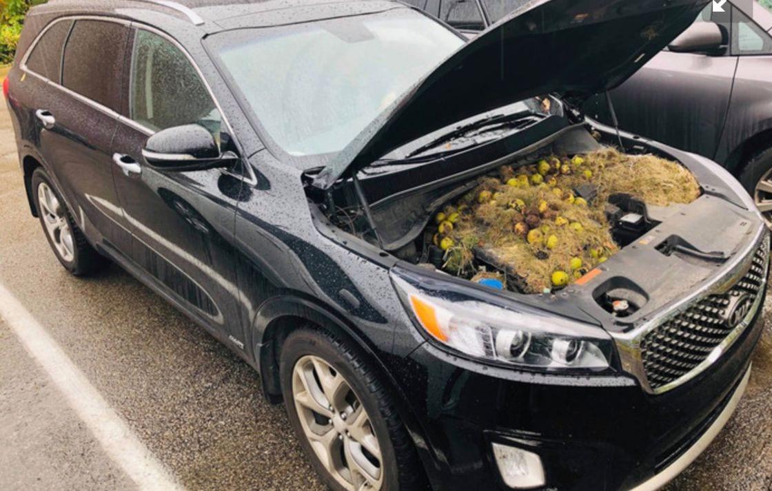 USA : Elle ouvre le capot de sa voiture et fait une étonnante découverte