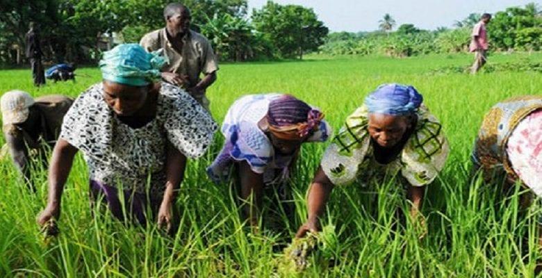 Afrique: 4 pays sur le point de consacrer 10 % de leur budget au secteur agricole