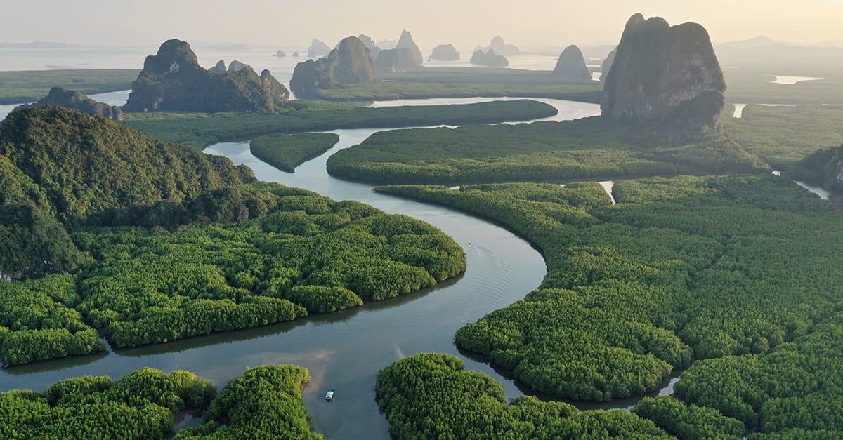 Les forêts africaines absorbent plus de carbone que l'Amazonie