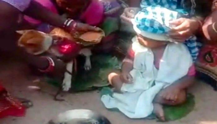 Inde: un enfant d'un an marié à un chien pour un rituel de sa tribu – photo