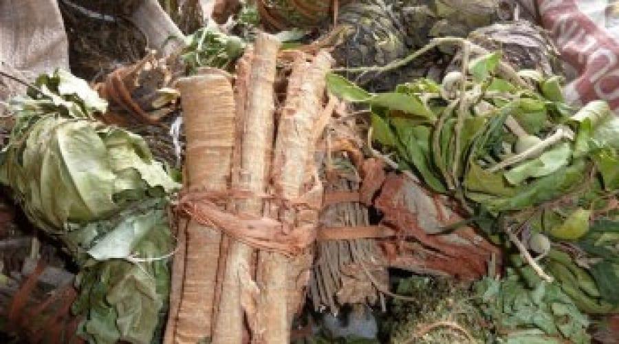Quelques noms de plante médicinale Béninoise trés éfficace