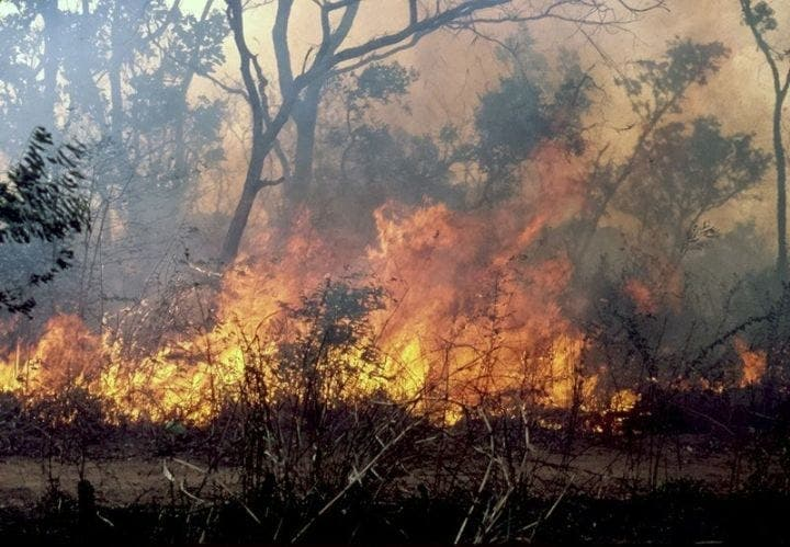 Togo : un feu de brousse a ravagé le champ d'un jeune entrepreneur agricole