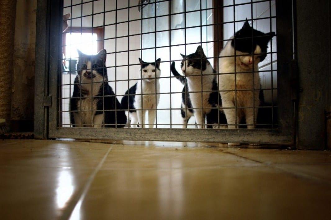 Confinement: les règles de déplacements assouplies pour l'adoption d'animaux en refuge