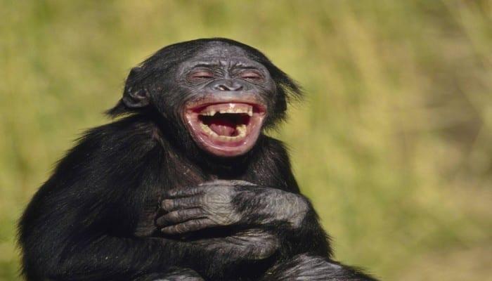 Top 10 des proverbes africains les plus drôles