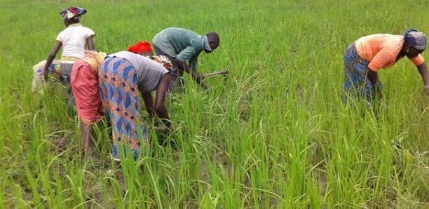 Campagne agricole 2020 : Tout le dispositif sera mis en place d'ici le 15 juin (ministre)