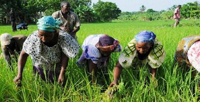 Côte d'Ivoire: 150 milliards FCFA pour soutenir l'agriculture face au coronavirus