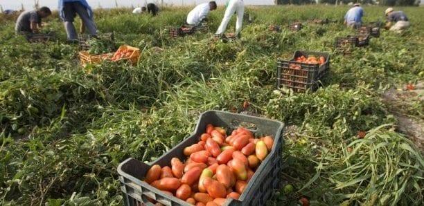 ASAU RECRUTE DES STAGIAIRES EN SUIVI D'AGRICULTURE  URBAINE