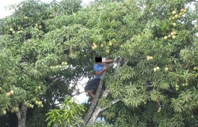 Bénin : un voleur de mangues interpellé par la police