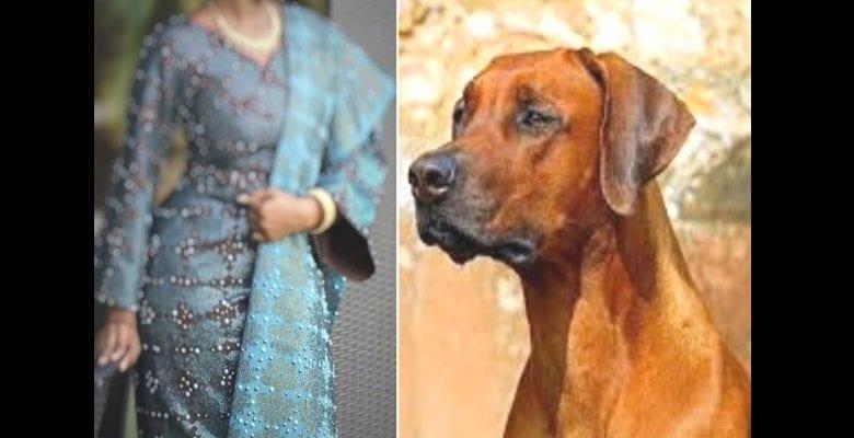 « Mon mari me droguait pour que son chien couche avec moi », une femme raconte comment elle a perdu son utérus