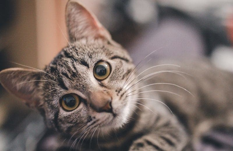 D'après une étude, les chats souhaitent la mort de leurs propriétaires