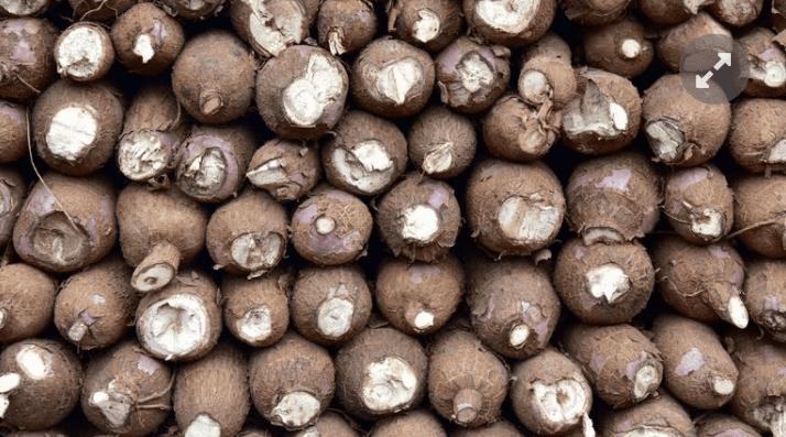 Ghana : du manioc pour produire de l'électricité