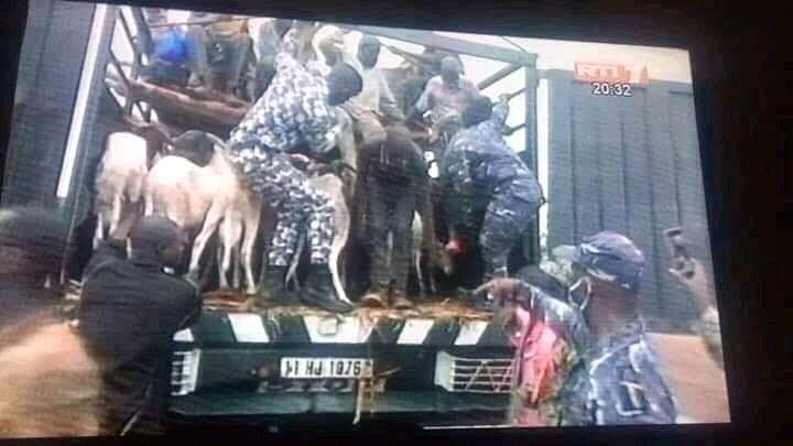 Des clandestins burkinabés cachés dans un camion de moutons, arrêtés (Photos)
