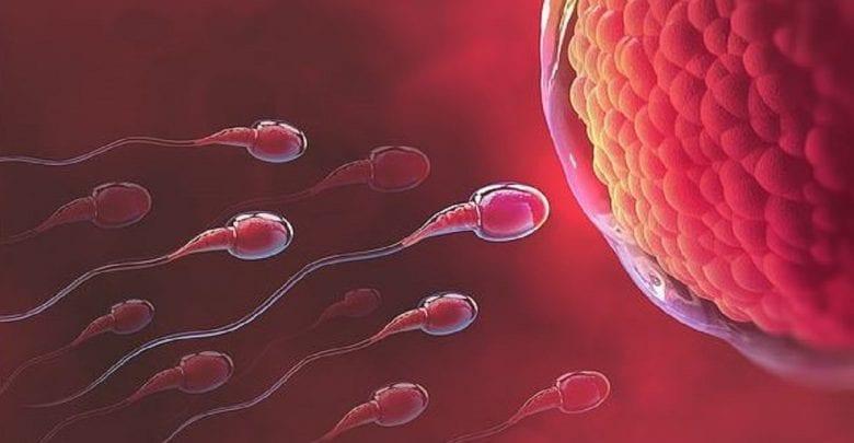 Etude: les œufs des femmes préfèrent le sperme de certains hommes aux autres