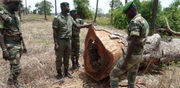 L'armée en guerre contre le trafic de bois