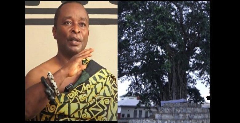 """Mpeni Kofi : l'arbre ghanéen qui se """"transforme en humain la nuit pour garder son peuple"""" (vidéo)"""