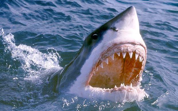 Un Australien trouve un requin dans son jardin après des inondations